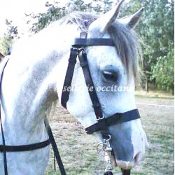 Heavy cavalry bridle