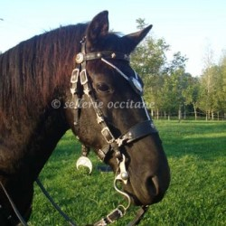 Bridle TRENCAVEL