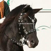 Horse show saddlery